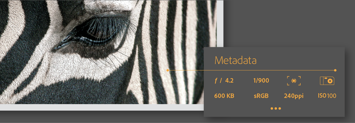 Work with metadata in Adobe Bridge CC