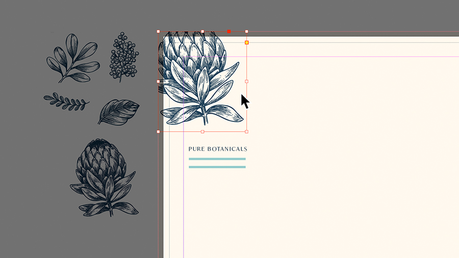 Adding botanical graphics to the corner of a letterhead layout