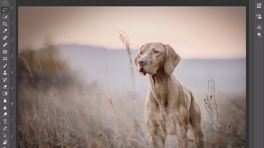 The Lasso tool is highlighted in the Toolbar next to artwork of a dog standing in a wheat field. Two wheat stalks are selected.