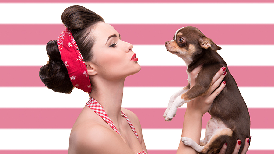 Woman holding a chihuahua dog with a pink and white striped background