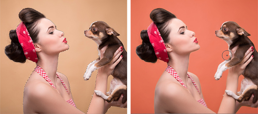 Woman holding a chihuahua dog selected to isolate and change the background color