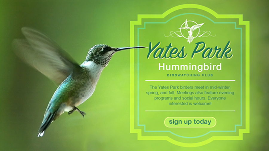 Ad for a birdwatching club featuring a hummingbird