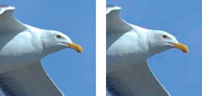 Image d'origine (à gauche) et image JPEG optimisée selon le paramètre de  qualité Bas (à droite)
